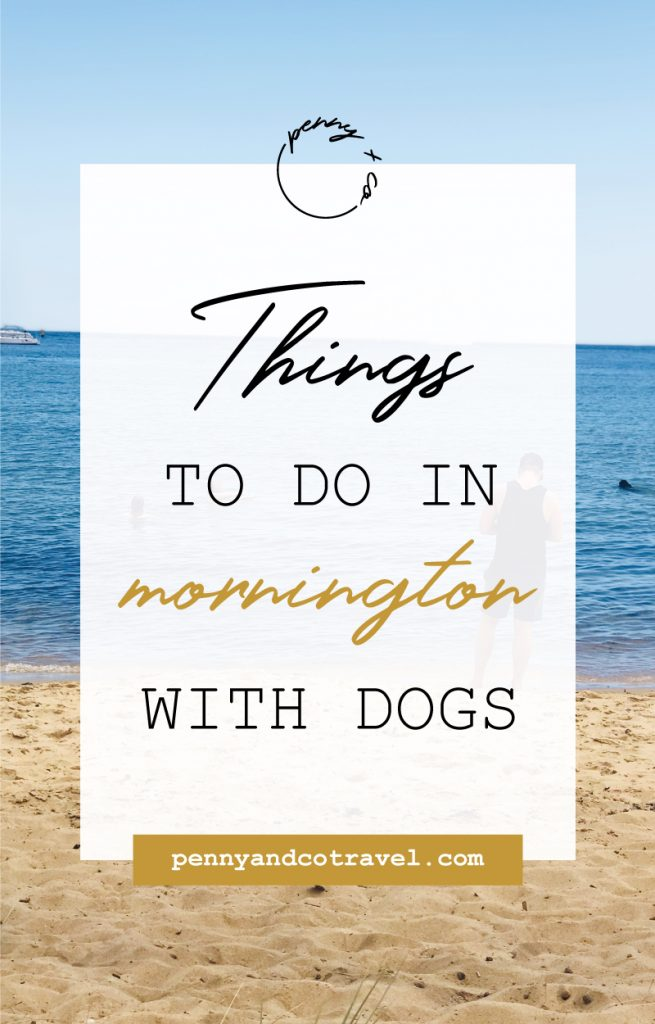 things to do in mornington with dogs