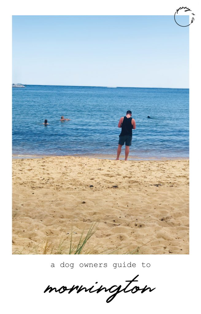 what to do in mornington with dogs
