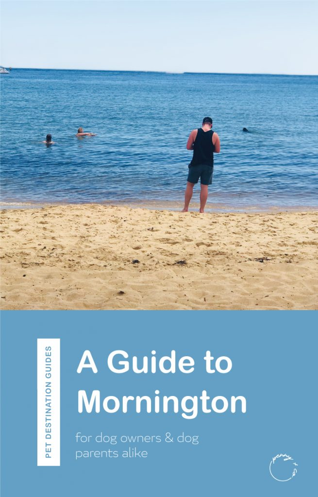A guide to Mornington for dog owners